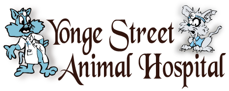 Toronto Veterinary Clinic - Yonge Street Animal Hospital
