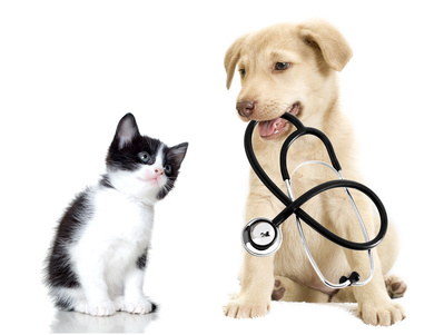 Pet Weight Management - Veterinary Clinic Toronto - Yonge Street Animal Hospital